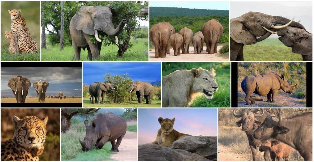 Africa wildlife
