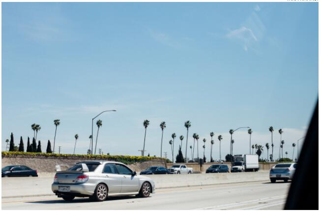 Los Angeles is full of tall palm trees